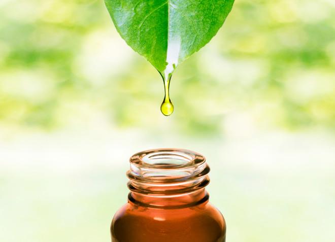 植物から作られるオイル