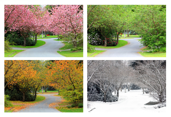 Four seasons on the same street.