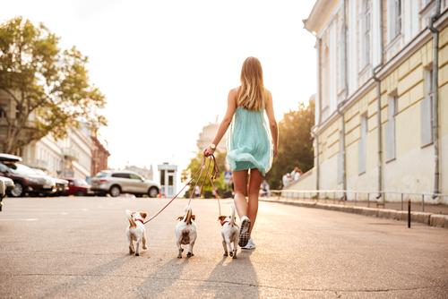 犬を散歩する女性の後姿