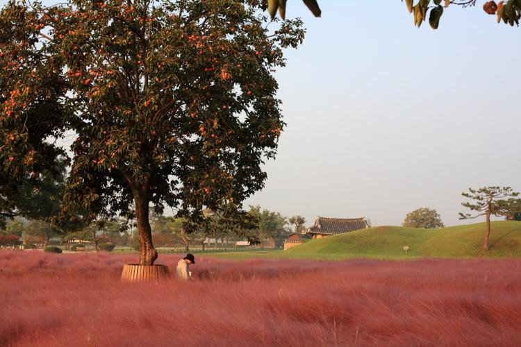 秋の食材・柿
