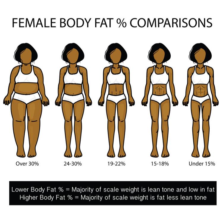 体脂肪率のイラスト