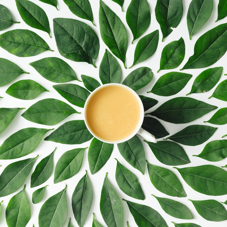 今注目!緑茶コーヒーダイエットの効果は!?何がダイエットに良いの?