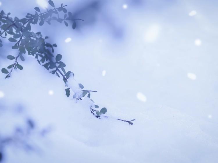 本格的な真冬