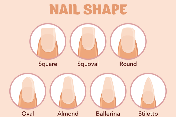 爪の形を決める