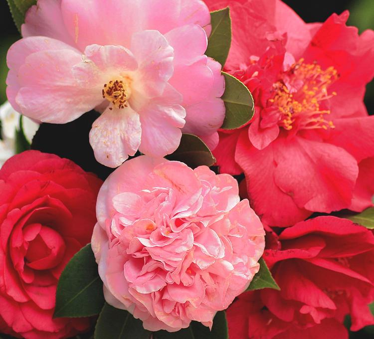 暖かな花びら
