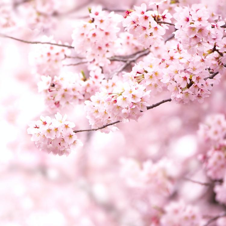 春爛漫を楽しむ