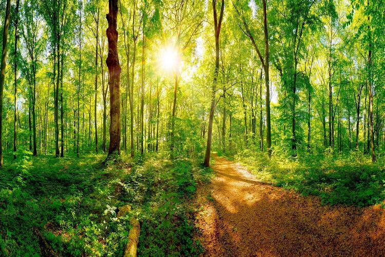 森林浴をする